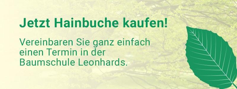 cta Hainbuche