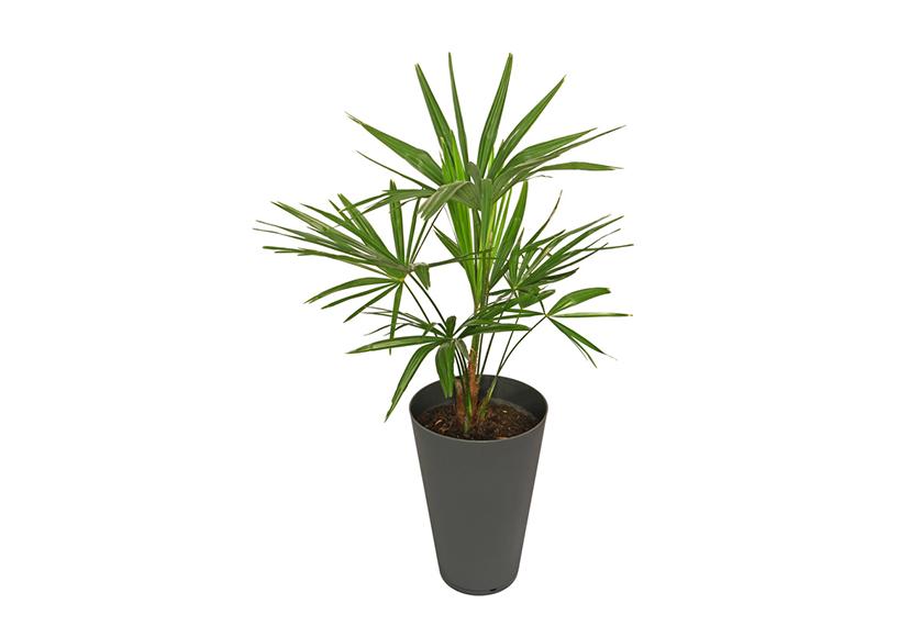 Repräsentative Kübelpflanzen für Unternehmen – unsere Tipps – Leonhards