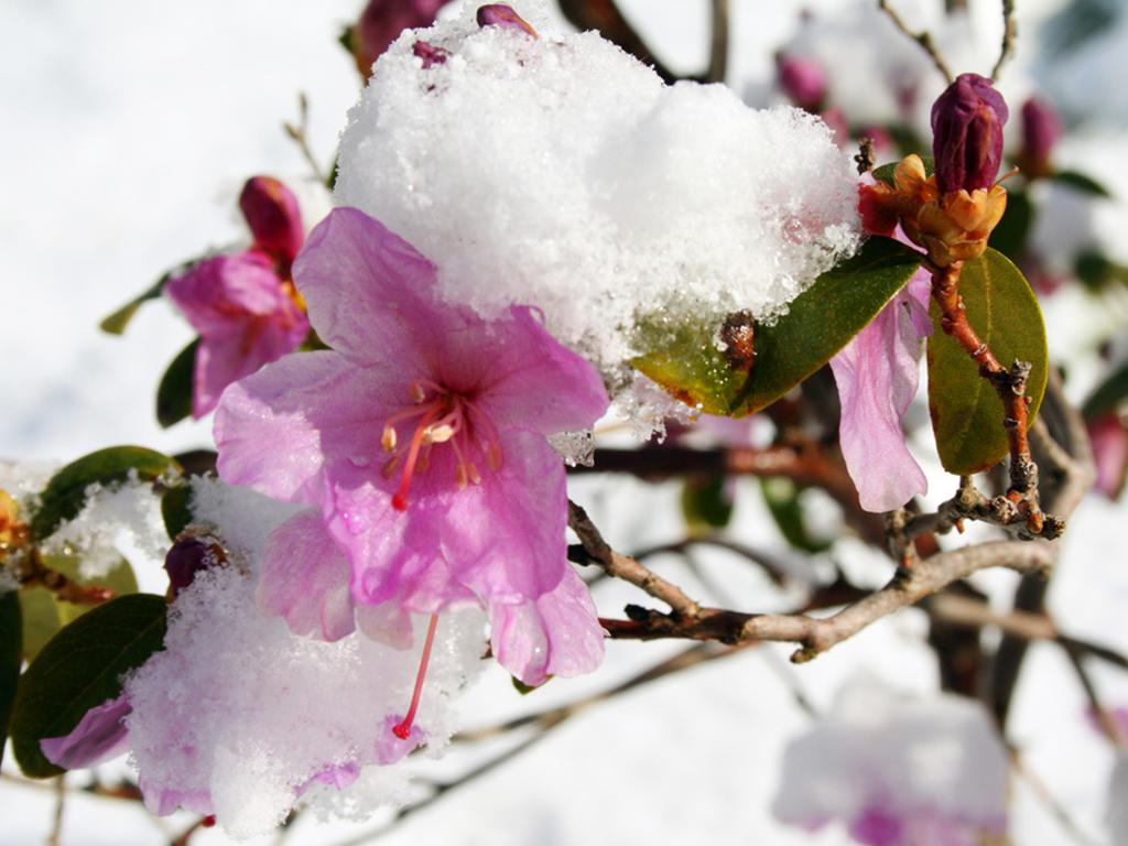 Immergrune Hecken Und Winterbluher Der Garten Im Frost Leonhards
