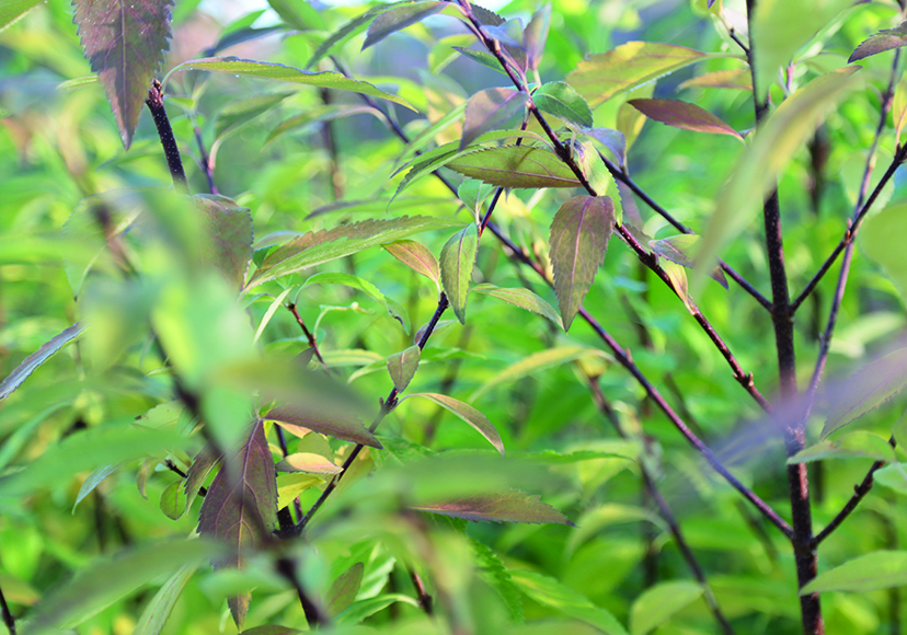 Vorgarten gestalten: Die 10 besten Pflanzen plus Checkliste – Leonhards