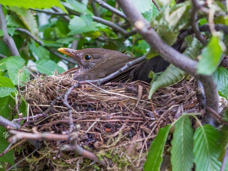 Vogelschutzzeit Was Ist Erlaubt Was Ist Verboten Im Hausgarten